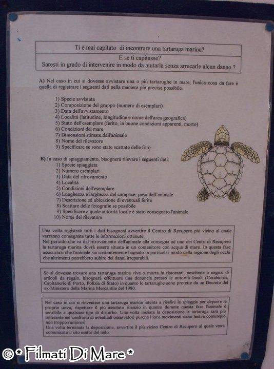 Linosa centro recupero tartarughe marine di linosa for Vasche per tartarughe marine
