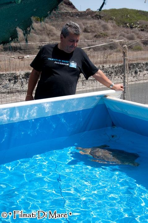 Linosa centro recupero tartarughe marine di linosa for Piscina per tartarughe