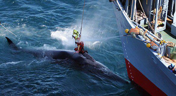 Sea Shepherd, anni dal 1986 al 1990