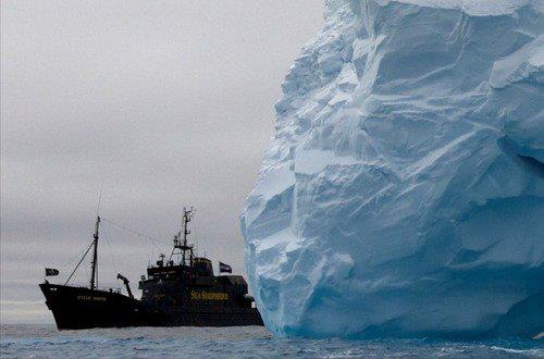 Sea Shepherd, anni dal 1994 al 1999