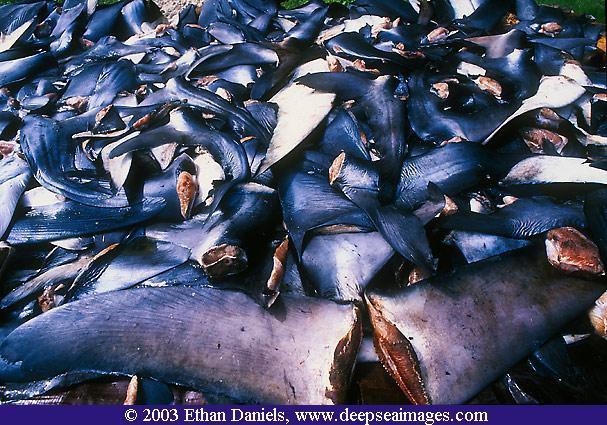Sea Shepherd, anni dal 2007 al 2010