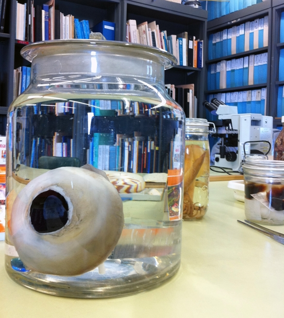 giant-squid-eye