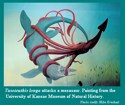 Il fantasioso dipinto di un Tusoteuthis longa di 30 piedi di lunghezza (8,5 m) in combattimento con un mosasauro (murale presso la  University of Kansas)