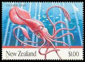 Calamaro colossale  -Mesonychoteuthis hamiltoni