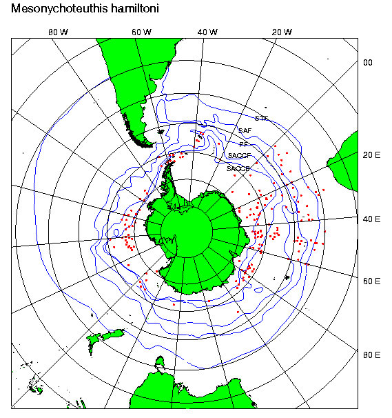 mesonychoteuthis mappa distribuzioone