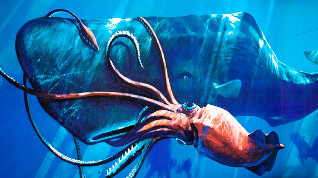Calamaro colossale  - Mesonychoteuthis hamiltoni