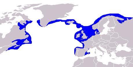AREALE del Pesce Lupo ,Lupo di mare,Anguilla lupo,Anarhichas lupus