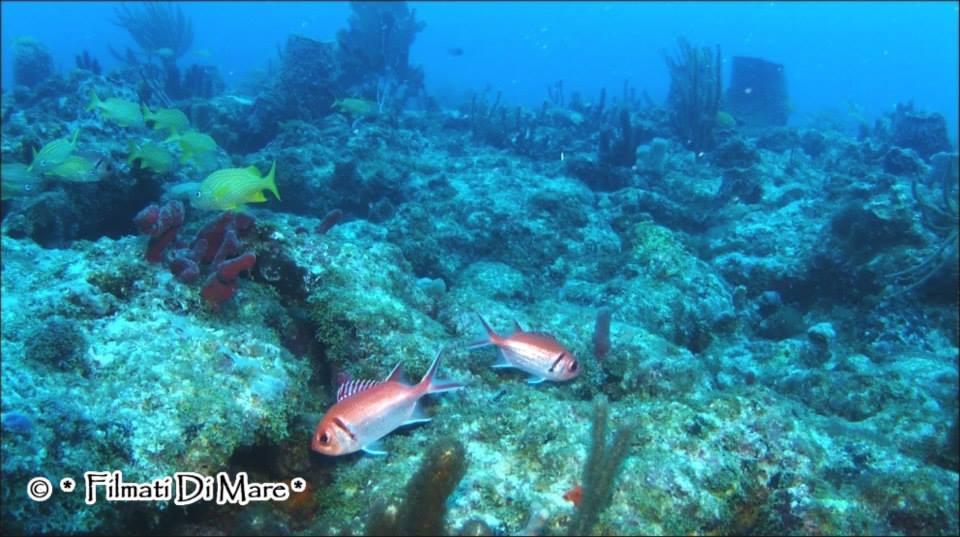 Pesce scoiattolo rosso [Myripristis Murdjan] Pinecone soldierfish - Crimson Soldierfish Foto: Pompano Beach, Florida- gennaio 2013