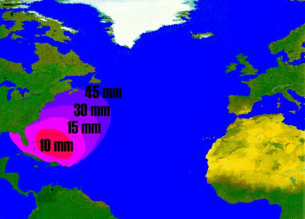 Anguilla americana - Anguilla Rostrata -immagine distribuzione e dimensione delle larve leptocefali dell'anguilla americana
