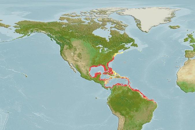 Sarago faraone della Florida - Mappa distribuzione dell' Archosargus probatocephalus