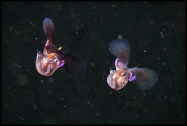 Sea butterflies di Alexander Semenov
