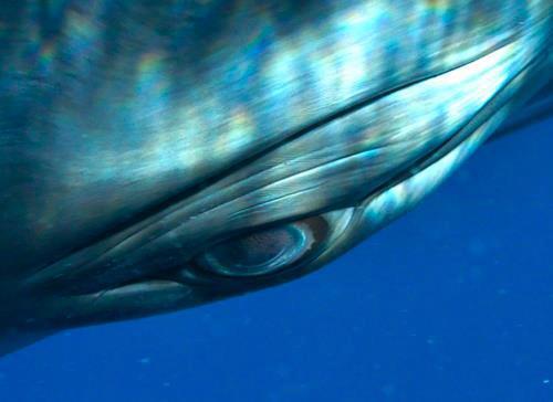 Delfini piangono i loro morti?