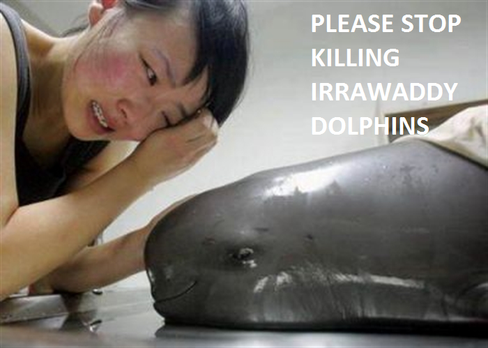 Delfino Orcaella brevirostris ( Irrawaddy dolphin)