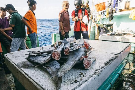 Tanzania Operazione Jodari con Sea Shepherd
